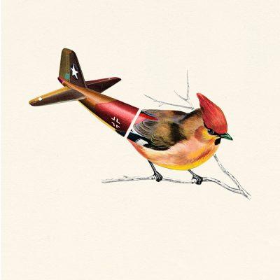 Aerofauna Brown Bird