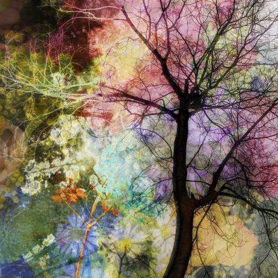 Watercolor Woods